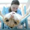 Стерилізація кішок
