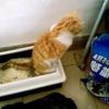 Запор у кішки