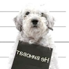 18 Самих грубих помилок собаківників у вихованні цуценяти.