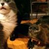 27 Самих прикольних фото кішок і кошенят 2013