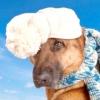 Аденовірусна інфекція у собак