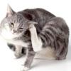 Блохи у кішок