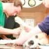 Хвороби нирок у собак