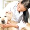 Хвороби вух у собак
