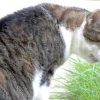 Що робити, якщо кішку нудить
