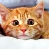 Що робити, якщо кіт не їсть