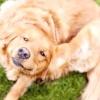 Що робити якщо собака свербить