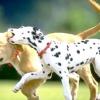 Що значить мова тіла собаки і як його правильно інтерпретувати?