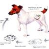 Глисти у собак: ознаки, симптоми, профілактика та лікування.