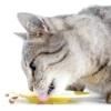 Як годувати стерилізованих кішок