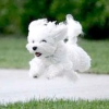 """Як навчити підходити по команді """"до мене"""" собаку або цуценя?"""