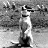 """Як навчити собаку команді """"апорт""""?"""