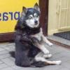 """Як навчити собаку команді """"сидіти""""?"""