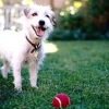 """Як навчити собаку команді """"стояти""""?"""