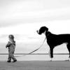 Як навчити собаку йти поруч без повідця?