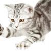 Як відучити кошеня кусатися і дряпатися - 10 порад