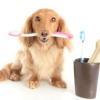 Як почистити зуби собаці?