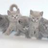 Як правильно вибрати кошеня - 7 рад