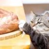 Як привчити кішку до домашньої їжі