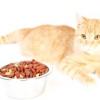Як привчити кота є сухий корм
