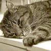 Як промити шлунок кішці