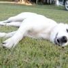 Як розвинути витримку у собаки? найважливіша команда в дресируванню.