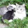 Як народжують кішки в перший раз