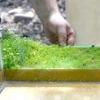 Як садити акваріумні рослини