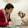 Як зробити клізму собаці