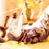 Як доглядати за кішкою після стерилізації?