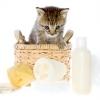Як доглядати за маленьким кошеням