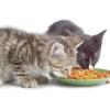 Як вибрати сухий корм для кішок