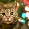 Кастрація кота: за і проти