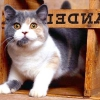 Клички кішок англійською мовою