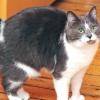 Годування літній кішки
