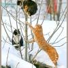 Кішки в березні