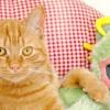 Кіт чи кішка, кого вибрати?