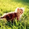 Красиві клички для кішок і котів