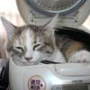 Лежаки і будиночки для кішок. як вибрати будиночок або лежак для кішки