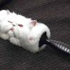 Линька у котів: причини і як позбутися