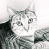 Лишай у кішок і котів: як виглядає і лікується
