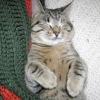 Мастит у кішки. симптоми і лікування маститу