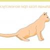 Сечокам'яна хвороба у котів: симптоми та лікування