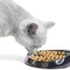 Чи можна годувати кішок тільки сухим кормом?