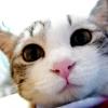Відгуки про корм cat chow (кет чау)
