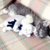 Перша кішка: чи варто купувати дорослу кішку або краще кошеня?