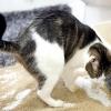 Чому кішка перестала ходити в лоток?