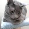 Чому у кішки течуть слюні ?!