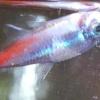 Чому помирають рибки в акваріумі