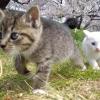 Підготовка до кастрації та стерилізації кішки. ускладнення і наслідки після стерилізації, кастрації кота